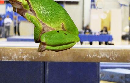 froggymnast
